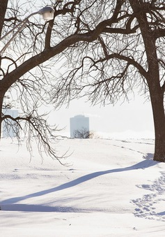 """Bão tuyết """"phủ trắng"""" thành phố Chicago"""
