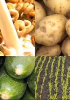 Sử dụng thực phẩm biến đổi gen liệu có an toàn?