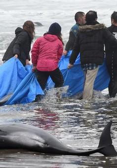 Nhật Bản: Gần 150 con cá heo trôi dạt vào bờ