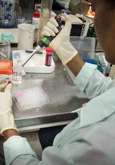 Phát hiện mới về thuốc điều trị ung thư từ vaccine sốt rét