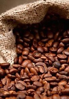 Nhiều doanh nghiệp xuất khẩu cà phê có nguy cơ vỡ nợ