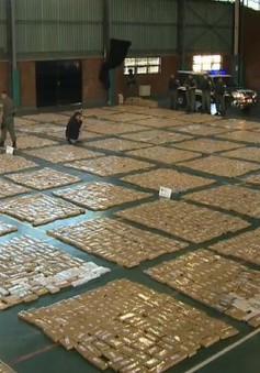 Argentina tịch thu lượng cần sa kỷ lục
