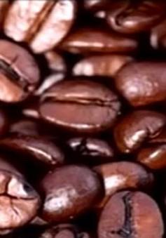 Cà phê Đà Lạt được bán trong cửa hàng Starbucks