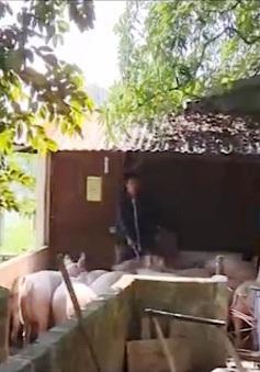 Ngành chăn nuôi cạnh tranh kém vì giá thành đắt