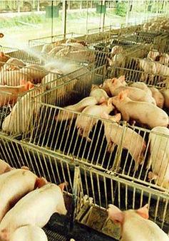 Nhiều hộ chăn nuôi lớn tại Đồng Nai sử dụng chất cấm