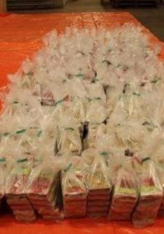 Hà Lan tịch thu hơn 1 tấn cocaine giấu trong lô hàng chở dứa