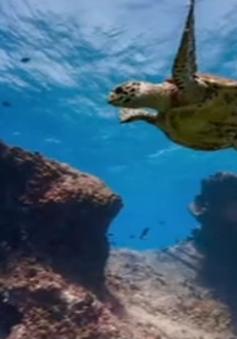 Khám phá đại dương với Google Street View