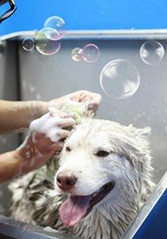 """TP. HCM: """"Sốt"""" dịch vụ chăm sóc thú cưng ngày Tết"""