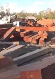 Bắt giữ hơn 1.000 khối gỗ vận chuyển trái phép