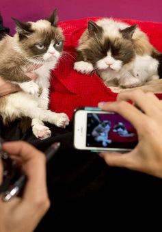 """Ra mắt mô hình tượng sáp chú mèo """"cáu kỉnh"""" Grumpy"""