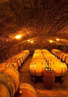 Serbia: Nghề làm rượu vang truyền thống trên đà phục hồi