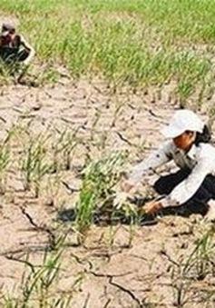 36 địa phương được hỗ trợ khắc phục hậu quả hạn hán
