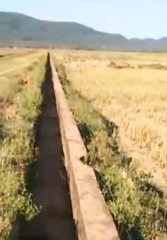 Nghệ An: Hạn hán tiếp tục gay gắt và khốc liệt