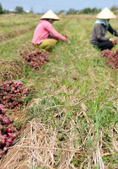 Tăng cường mối liên kết 4 nhà trong nông nghiệp