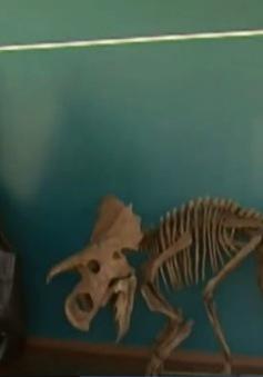 Mỹ: Công bố hóa thạch của loài khủng long chưa có tên