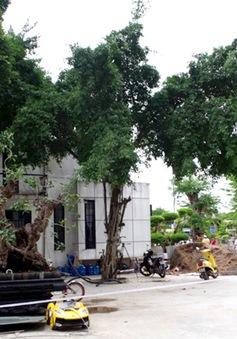 Nhìn lại vụ thảm sát tại Bình Phước: Sau 3 ngày bắt được nghi can