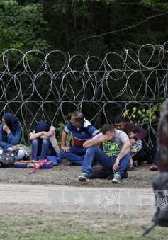 Hungary dựng hàng rào dọc biên giới với Slovenia