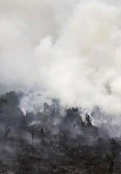 Indonesia chưa thể giải quyết triệt để nạn cháy rừng