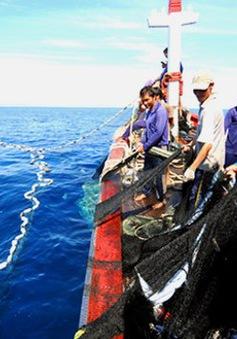 Thừa Thiên-Huế: Khai thác xa bờ phát triển mạnh chưa từng có