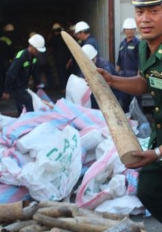 Khởi tố vụ buôn lậu hơn 2 tấn ngà voi qua cảng Tiên Sa