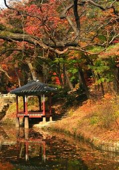 Nhật Bản, Hàn Quốc - Hai điểm đến lãng mạn của mùa Thu