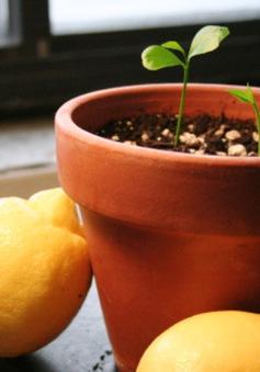 10 loại cây dễ sống trong bếp
