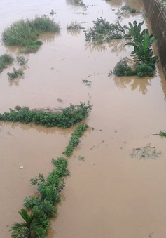 Lũ thượng nguồn đột ngột dâng cao tại Lào Cai