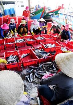 Quảng Ngãi: Thời tiết thuận lợi, ngư dân được mùa thủy sản