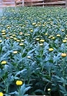 Thí điểm dự án ứng dụng công nghệ trong quản lý nông nghiệp