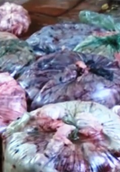 Nội tạng bẩn – nguyên liệu sản xuất mỡ bẩn