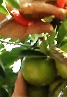 Đồng Tháp tìm hướng nâng giá trị nông sản