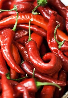 Vị cay của ớt có tác dụng giúp giảm các cơn đau hiệu quả
