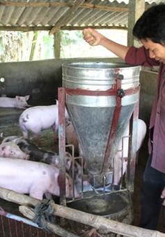 Quảng Bình phòng ngừa dịch bệnh trên gia súc