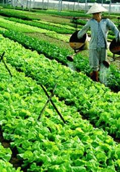 Mưa lớn, giá rau tại các tỉnh miền Trung vẫn ổn định