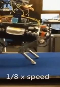 Chó robot có khả năng di chuyển trên mọi địa hình