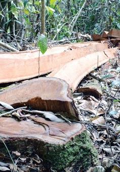 Gia tăng tình trạng xâm hại rừng Nam Cát Tiên