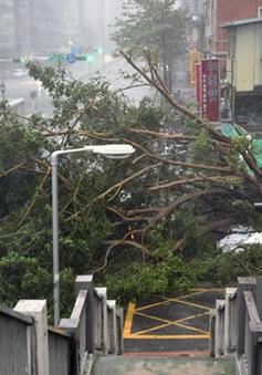 Siêu bão Soudelor tàn phá Đài Loan (Trung Quốc)