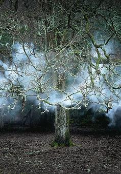 Ám ảnh trước quang cảnh rừng ma quái ở Anh