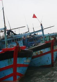 Nhiều tàu cá ngừ chuyển nghề khai thác tại Nam Trung Bộ