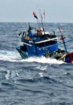 Tàu cá ngư dân Quảng Ngãi bị chìm ở Trường Sa
