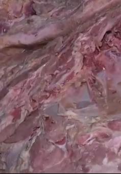 Bắt hơn 4 tấn thịt lợn chết chuẩn bị tuồn ra thị trường