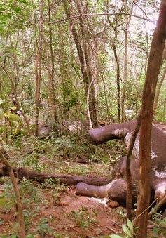 Nạn săn bắt thú rừng trái phép tại Lâm Đồng