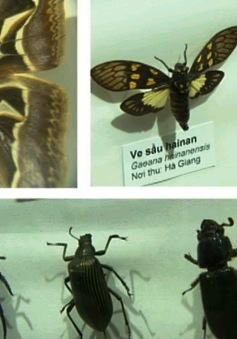 Tìm hiểu thế giới thiên nhiên qua tiêu bản côn trùng