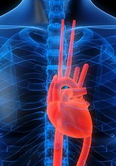 Người thiếu vitamin D trong máu dễ mắc các bệnh tim mạch