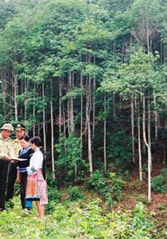 Dịch vụ môi trường rừng - Thành tựu nổi bật trong bảo vệ và phát triển rừng