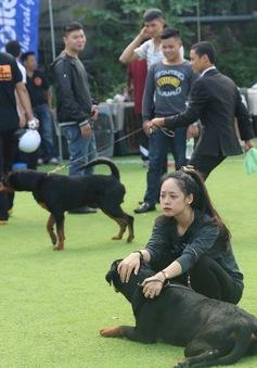 Dogshow Rottweiler 2015: Ngày hội của những người yêu chó miền Bắc