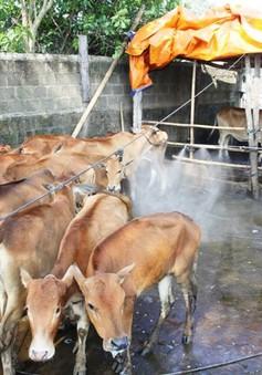 Hà Tĩnh: Tiêu hủy 18 con lợn bị lở mồm long móng