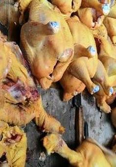 Bổ sung vàng ô vào danh mục chất cấm sử dụng trong chăn nuôi