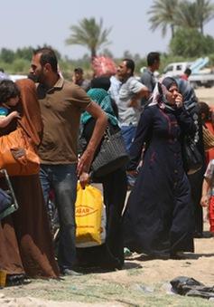 Iraq: Hàng chục nghìn người dân chạy trốn khỏi Ramadi