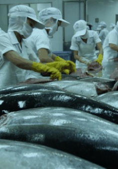 TPP và thách thức đối với thị trường xuất khẩu cá ngừ